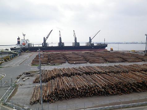 外港昭和南地区 原木船